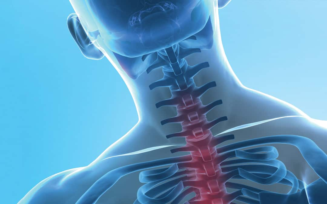 Vertebral Column: Backbone of the Spine
