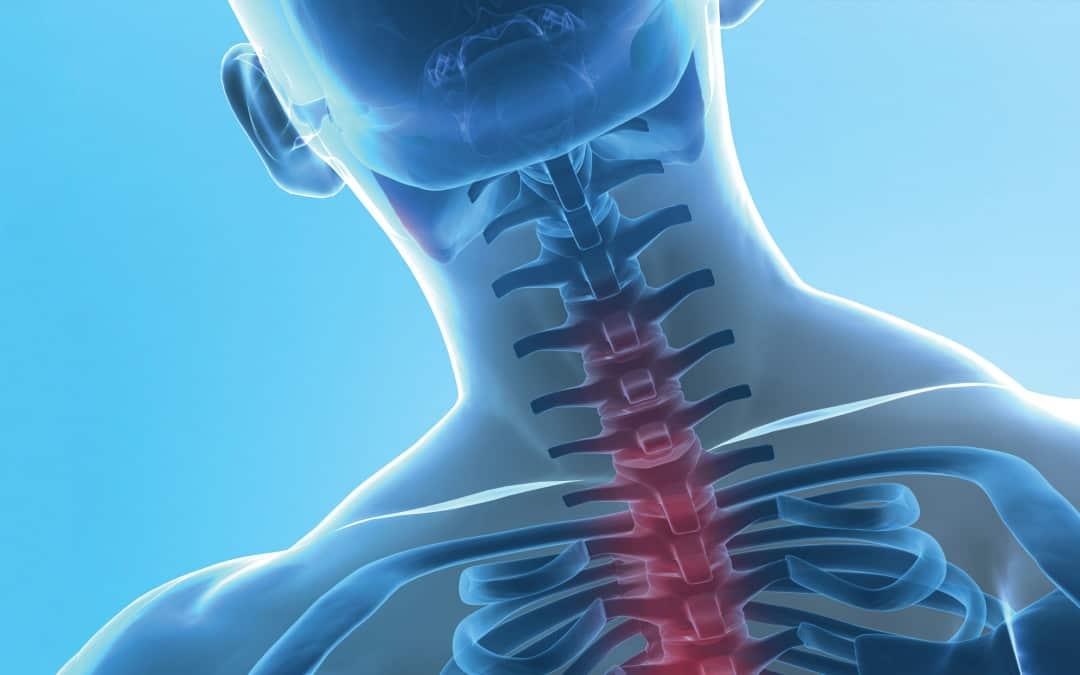 Vertebral Column: Backbone of the Spine
